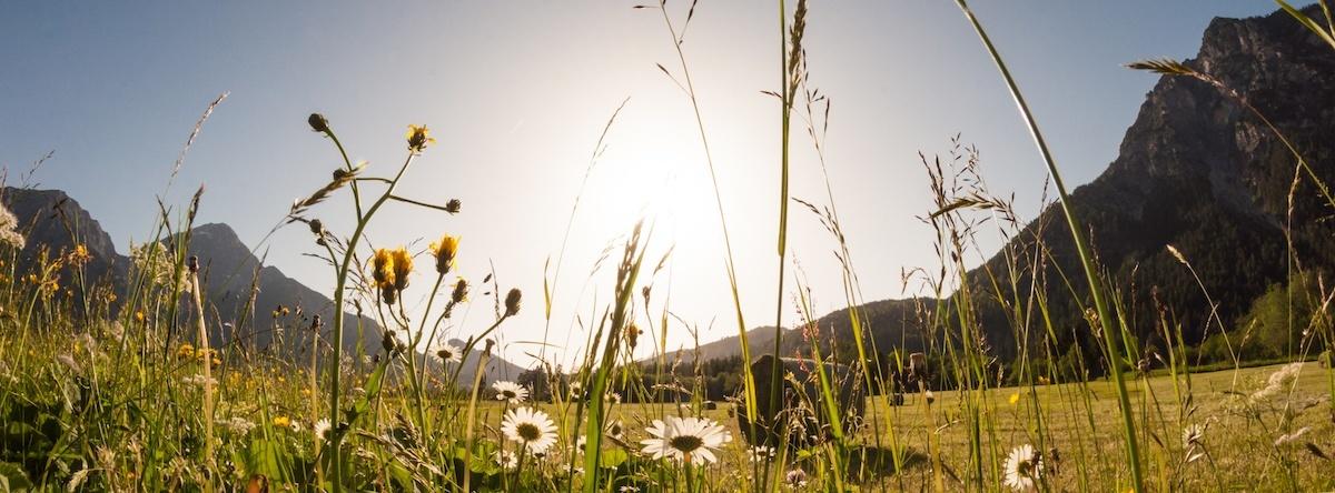 Wildblumenwiese in den Alpen, Tirol, Österreich