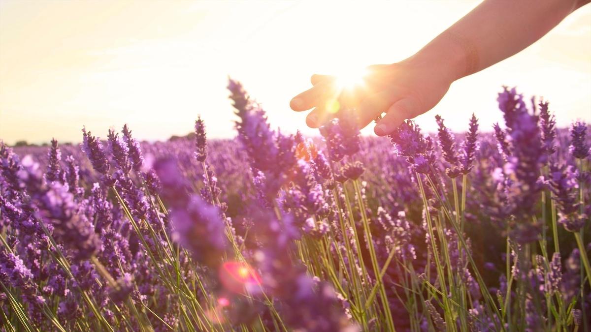 Lavendel-Öl in Kosmetik
