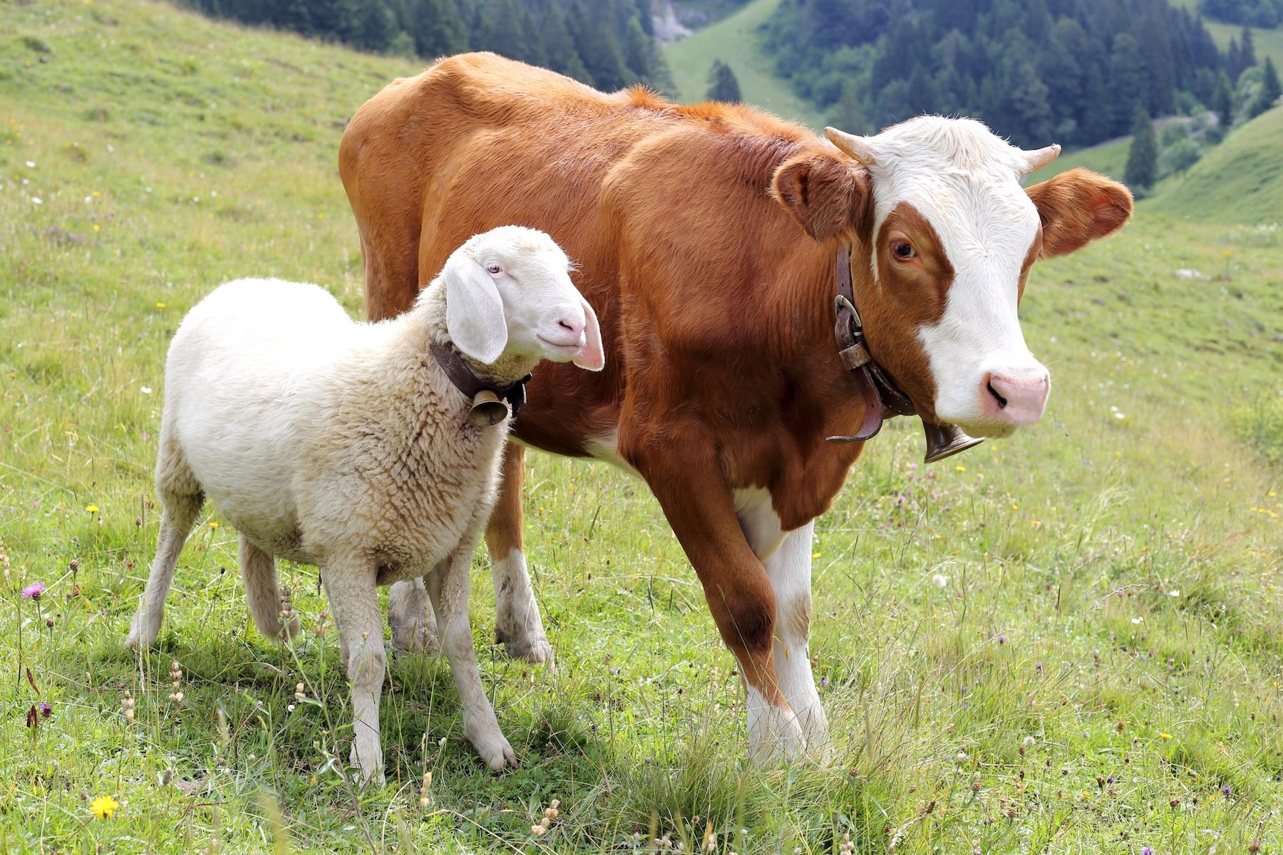 """Am 4. Oktober war Tierschutztag – 5 Tipps für mehr Tierwohl.""""Alle Geschöpfe der Erde fühlen wie wir, alle Geschöpfe streben nach Glück wie wir. Alle Geschöpfe der Erde lieben, leiden und sterben wie wir.""""  Franz von Assisi"""