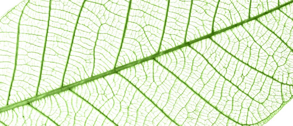 Die Atrophische Haut – 5 Tipps um dagegenzuwirken.Die Haut auf Zeitreise - ein natürliches Phänomen des Älterwerdens.